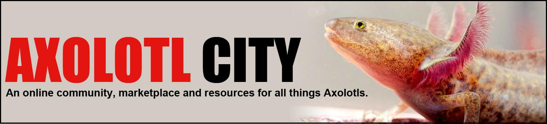 Axolotl City